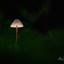 paddenstoellampenkap