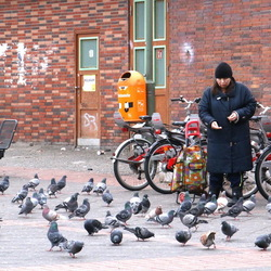 Berlijn - duiven voeren