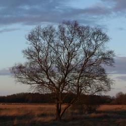 Zomaar een boom in Hoogeveen