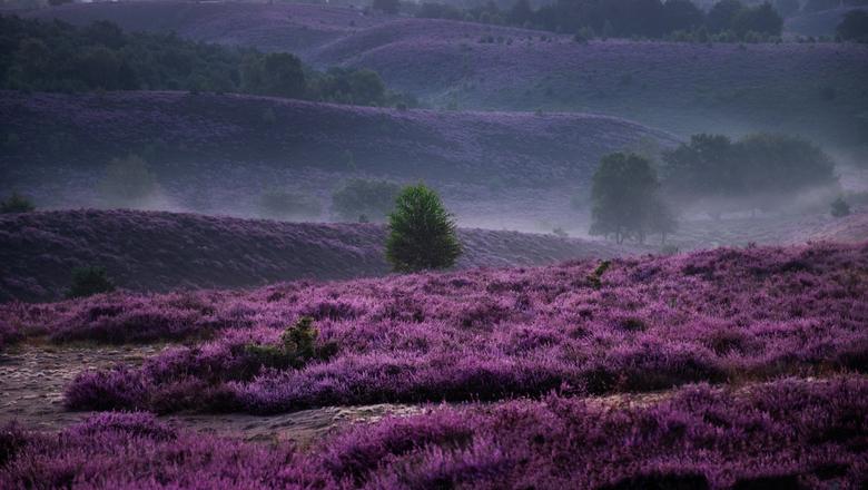 Purple hills - Midden in de nacht opstaan om al vroeg in de ochtend te arriveren op de parkeerplaats beneden aan de voet van de Posbank. Samen met 2 a