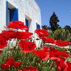 Griekse Kleuren