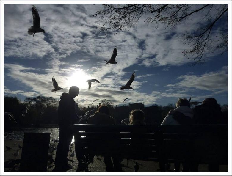 Birds! - In Hyde Park, een beetje gespeeld met tegenlicht en enthousiaste vogels...