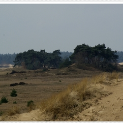 kootwijk zand
