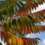 Boom in drie herfstkleuren