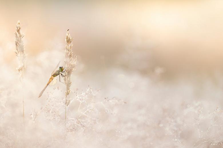 Op de uitkijk - Deze foto is met zacht tegenlicht gemaakt tijdens een frisse morgen met veel dauw.<br /> Met de macrolens op zo&#039;n twee meter afs