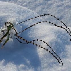 Winter in Gouda