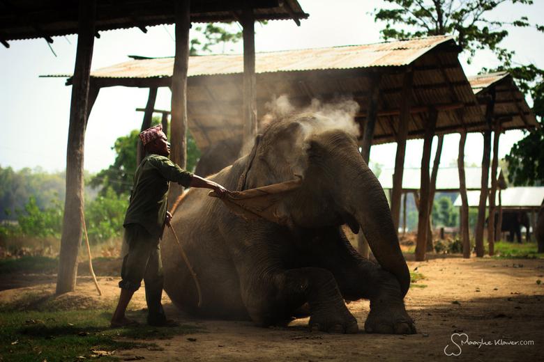 Mahout - Mahout Sanichara maakt zijn olifant Chumpa Kali schoon voordat hij haar meeneemt naar de rivier voor een verkoelend bad.