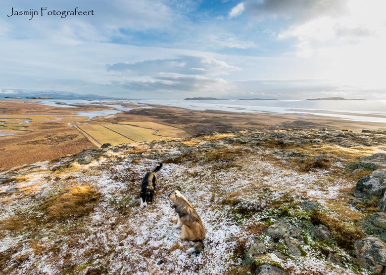 Spelende hondjes op een berg in IJsland -
