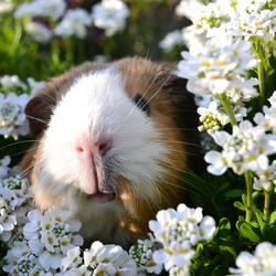 Loes tussen de bloemen