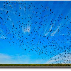 Vogeltrek.jpg