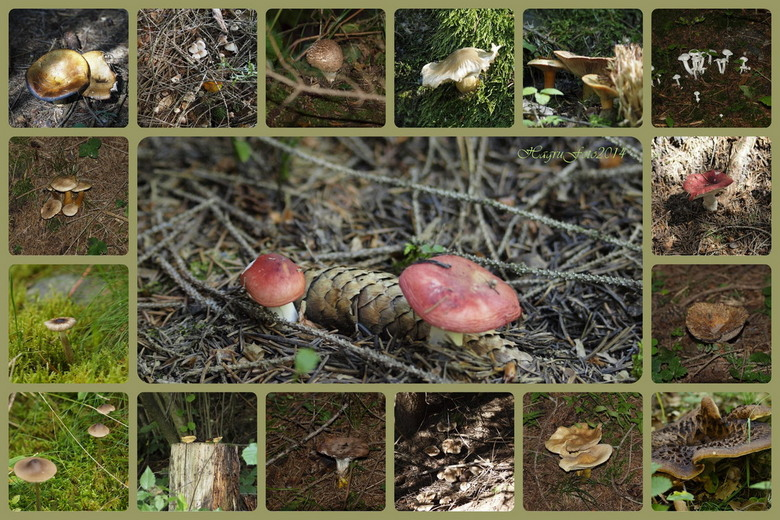 Paddestoelen September2014