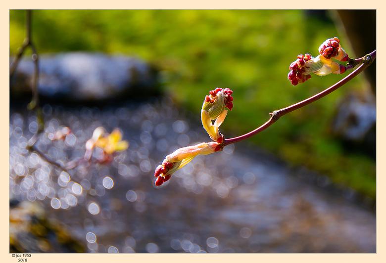 Lente in de Japanse tuin 5