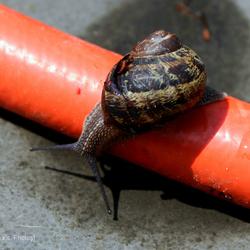 slak & (tuin)slang