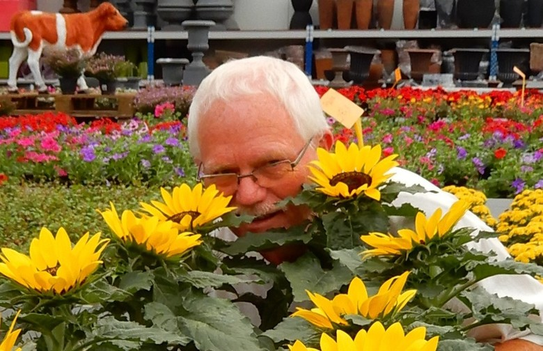 nieuwe zonnebloem - vorig jaar kwam ik een vreemde zonnebloem tegen in een tuincentrum ergens in het land.....<br /> dank voor eerdere comments en st