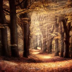Herfst in Hoog Buurlo