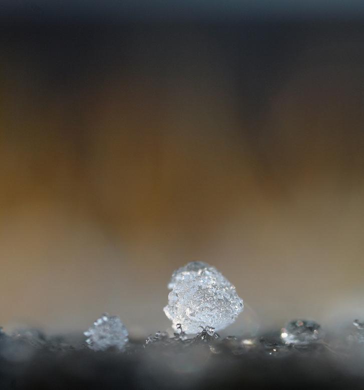 hagel - nog tijdens de hagelbui een vers exemplaar uitgezocht.<br /> canon 65mm L macro<br /> iso 200 1/80 sec f 5,6