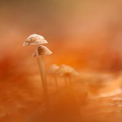 December paddenstoel
