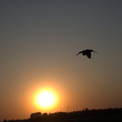 grutto bij ondergaande zon
