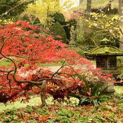 Japanse herfst.