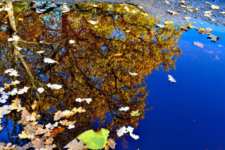 Herfst laag bij de grond - Herfst op z'n best gespiegeld in een plas.