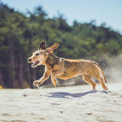 hond actie