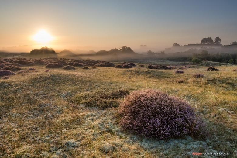 Goede morgen uit de Bergense duinen