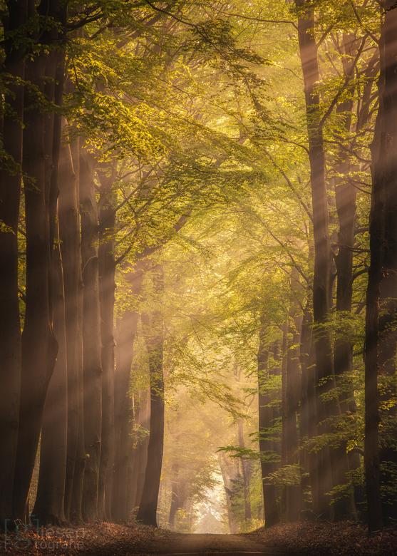 Dromerige zonneharpen - De mooiste ochtenden voor een wandeling in de bossen bij Odoorn..<br /> Hier word je toch blij van!