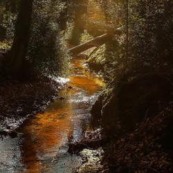 Herfst in Espelo
