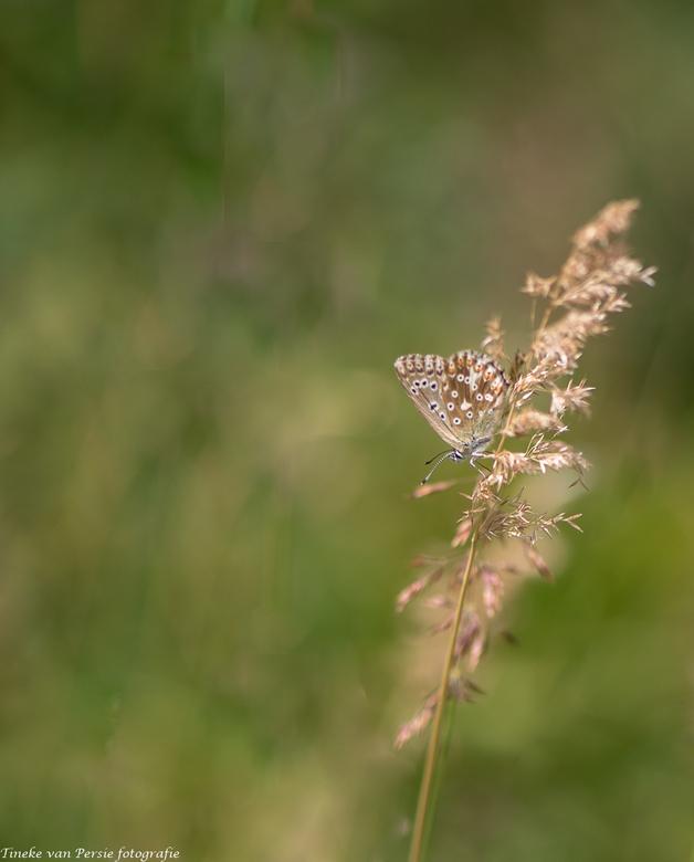 Going down - 1 van de vele vlinders die ik tijdens onze wandelingen heb gezien in Oostenrijk.