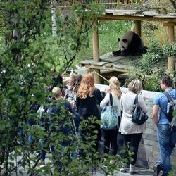 Panda kijken