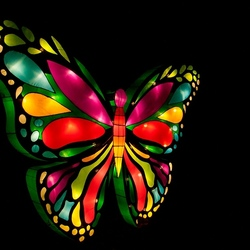 Butterfly in China light