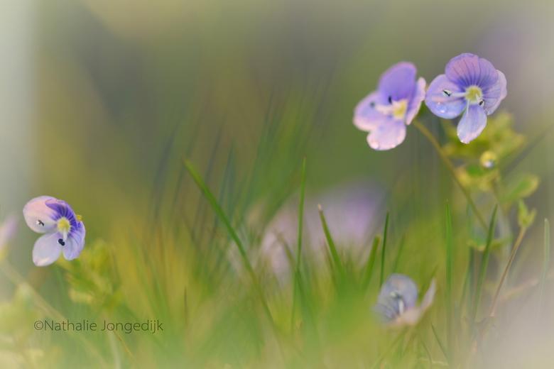 Onkruid bestaat niet - Sommige mensen noemen het onkruid, maar ik vind het gewoon mooi!<br /> <br /> Dank voor reacties op mijn vorige foto&#039;s.