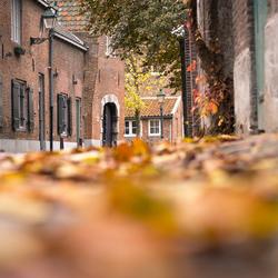 Herfst in 's- Hertogenbosch