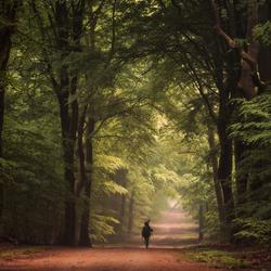 Forest Feelings.