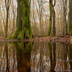 Spiegeling in het Speulderbos