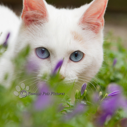 Bailey 'flower sensation'