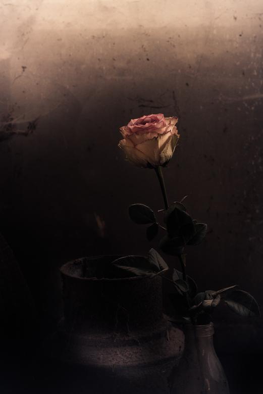Verlaten schoonheid -