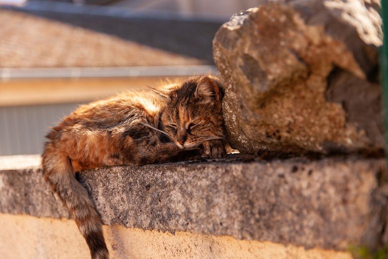 Rust - Katje dat ligt te slapen
