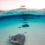 Pijlstaart roggen op de zandbank bij Grand Cayman