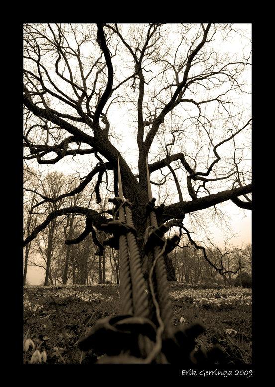 tree 2 -