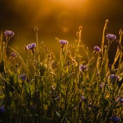 Golden hour in de garden...
