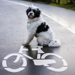 Kenyi leert fietsen
