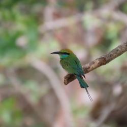 Vogel in Sri Lanka
