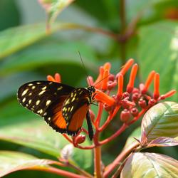 in de vlinder tuin