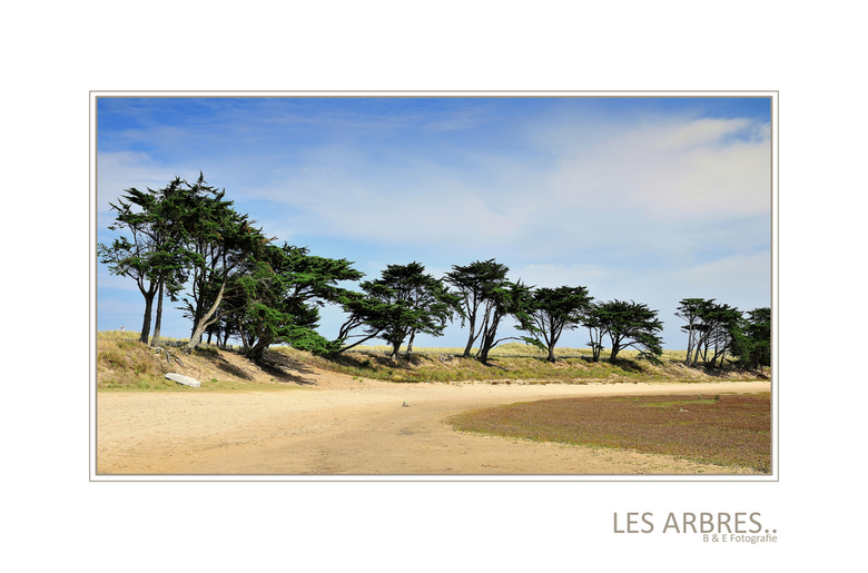 Les Arbres.. - Dag mensen, nog even verder met Frankrijk, deze foto genomen zo'n beetje op de grens tussen Normandie en Bretagne. Hier lag een gr