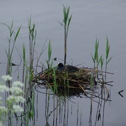 op 't nest