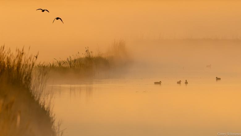 Mistig landschap. - Op een mistige ochtend dobberden er enkele eenden in het water. Ik hoorde de andere wilde eenden aankomen. Gewacht totdat ze zicht