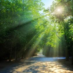 Vondelpark morning light