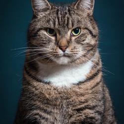 Crumpy Cat (Simba)