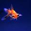 Aquarium -1-